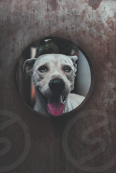 my dog photo
