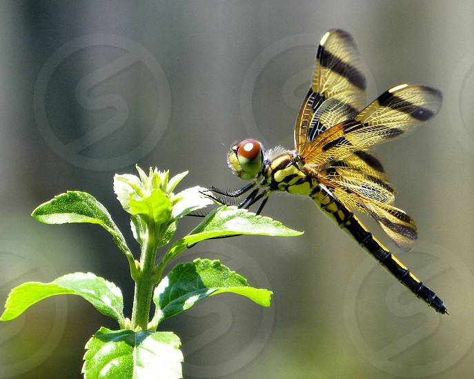 dragonfly insect nature photo