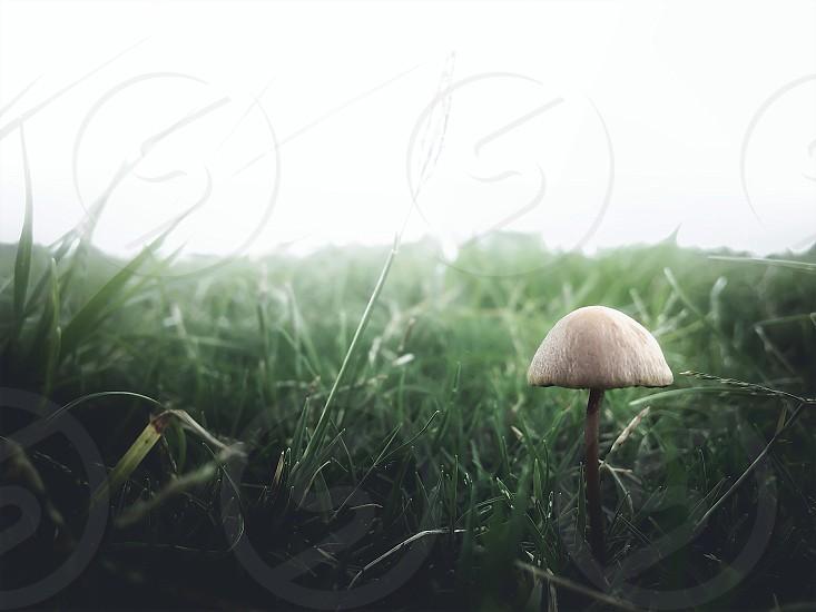 brown and white mushroom photo