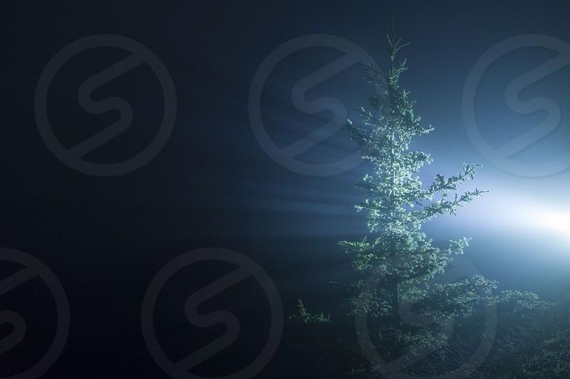 Tree night landscape fog light rays photo