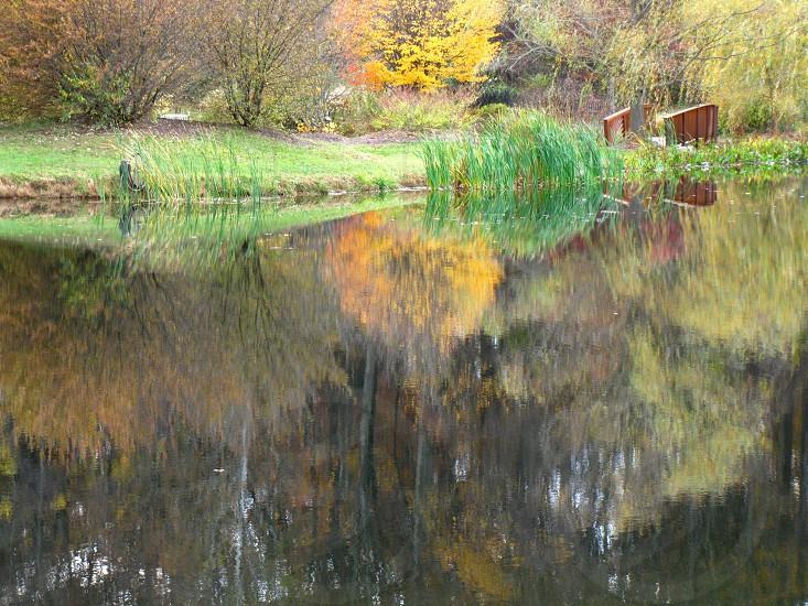 Fall scenery at the Botanical Gardens in Vienna VA photo