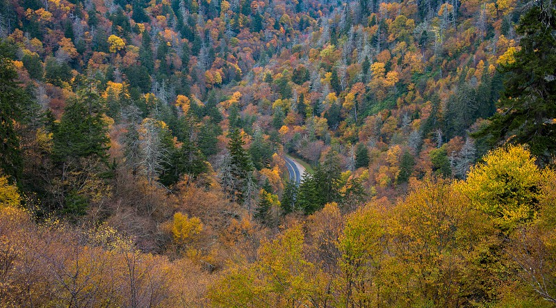 Mountain road in the Smoky Mountains surrounded by fall colors. photo