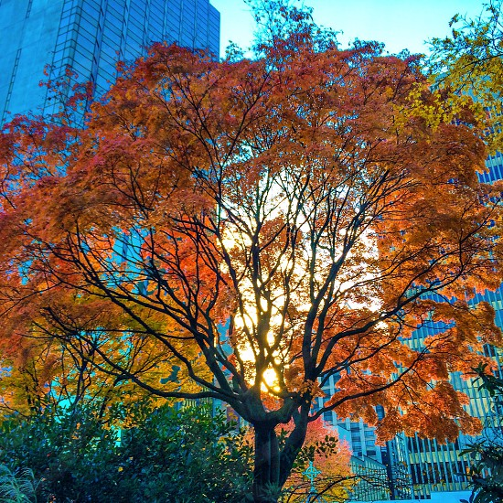 City tree photo