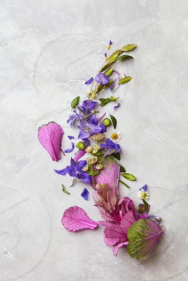 Representation of composition of flowers over grey background may be used for designing any copy space post card holiday etc. photo