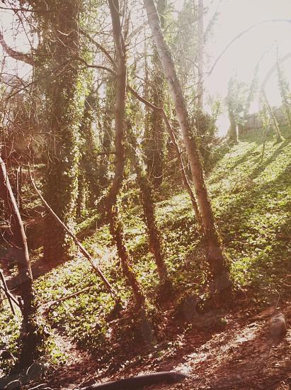 small trees photo