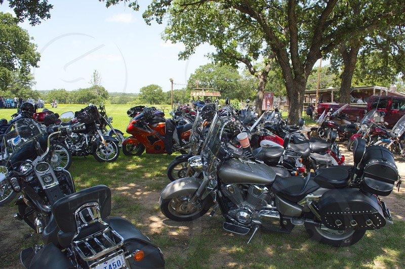 Group of motorcycles parked in the shade under a tree in a grassy field. photo