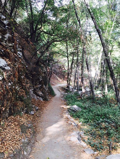 photo of pathway in forest photo