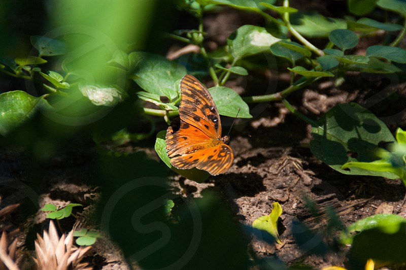 tiggered butterfly surrounded by plants photo
