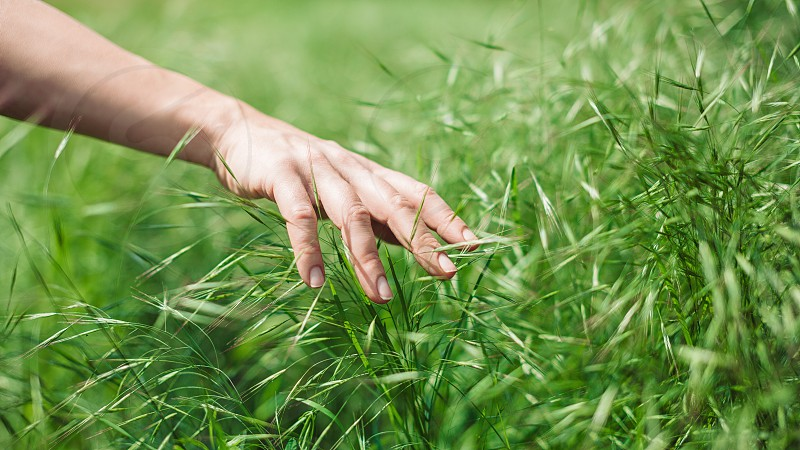 Woman's hand touching the grass 'feeling nature' photo