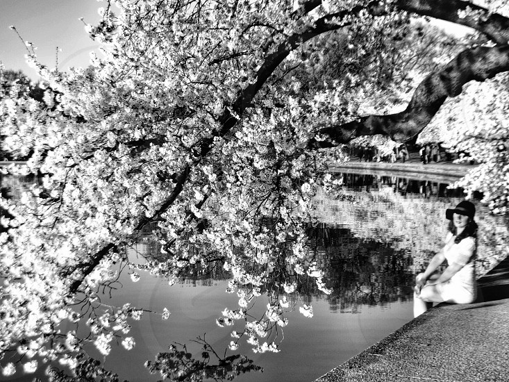 woman under white cherryblossom tree near river  photo