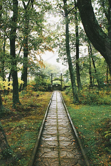 gray pathway between tall trees taken during daytime photo