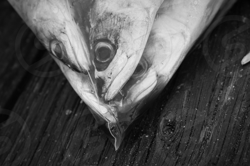 fishes inside clear plastic pack in grayscale photo