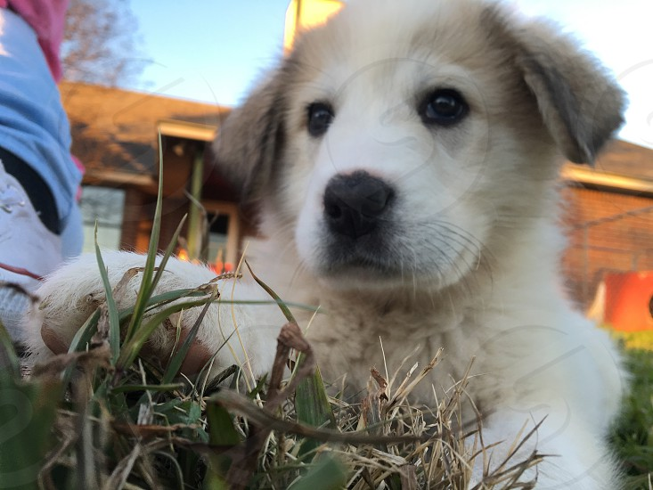 puppy photography cute adorable fluffy photo