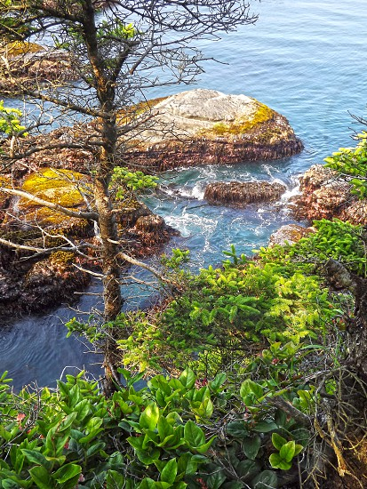 Pacific Northwest Coast photo