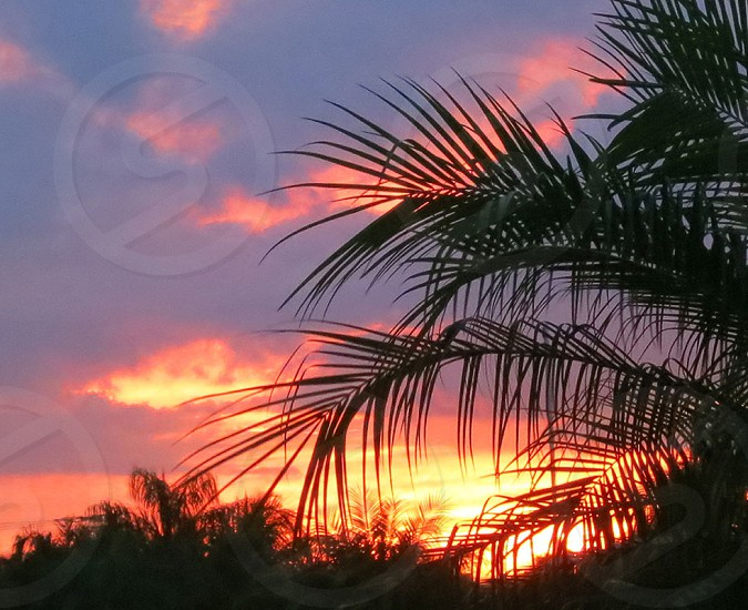 Palm fronds in orange and yellow sunset photo