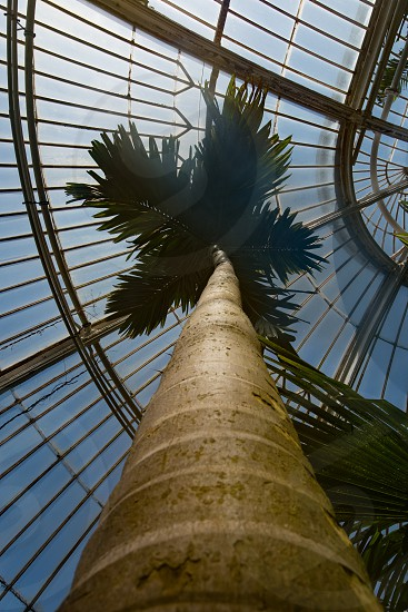 Upward view of a palm tree in a palm house photo