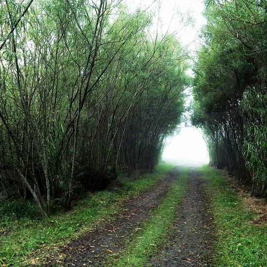 green and black pathway between trees photo