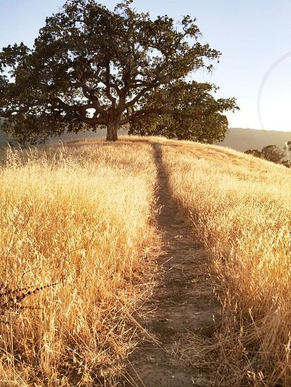 brown tree field photo