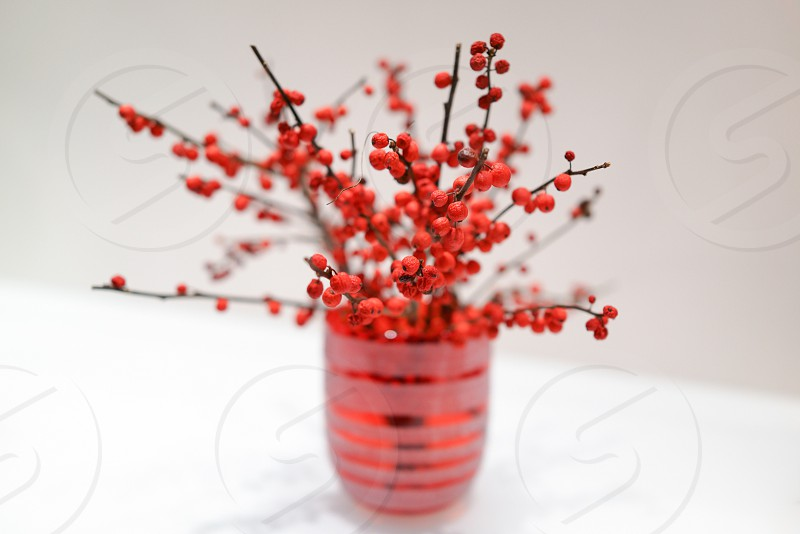 small red berries photo
