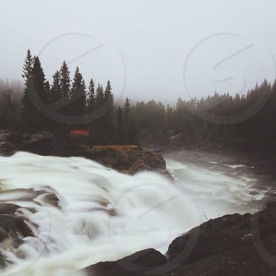 green pine trees near the falls photo
