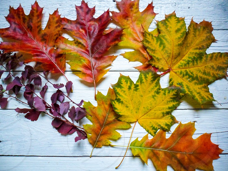 colorful leaves autumn color colorful photo