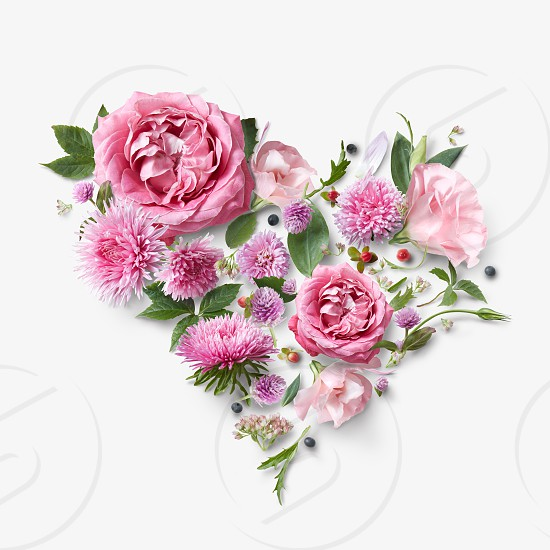 Beautiful pink flowers in a heart on a white background postcard photo