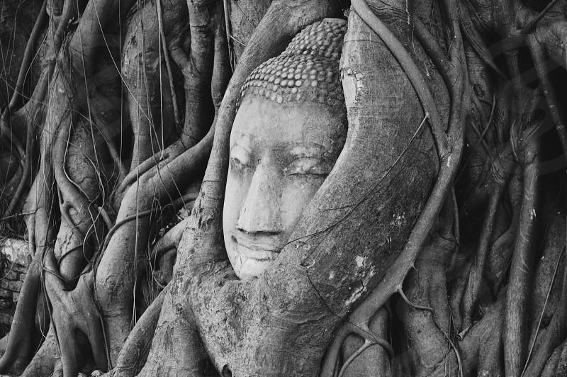 grey buddha head photography photo