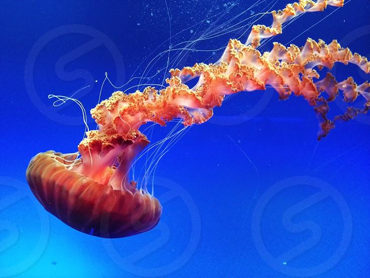 Monterey Bay Aquarium CA. photo