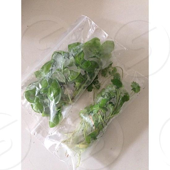 green parsley photo