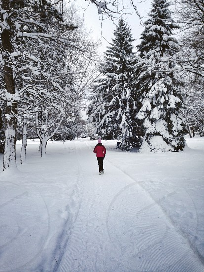 person walking on snow covered ground photo