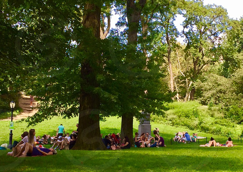 Central Park summer summertime park people relaxing summer activity tourists photo