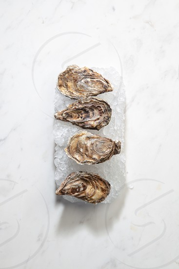 Top view of fresh raw oysters on white crushed ice on a stone white background with shadows. Restaurant delicatessen. Flat lay photo