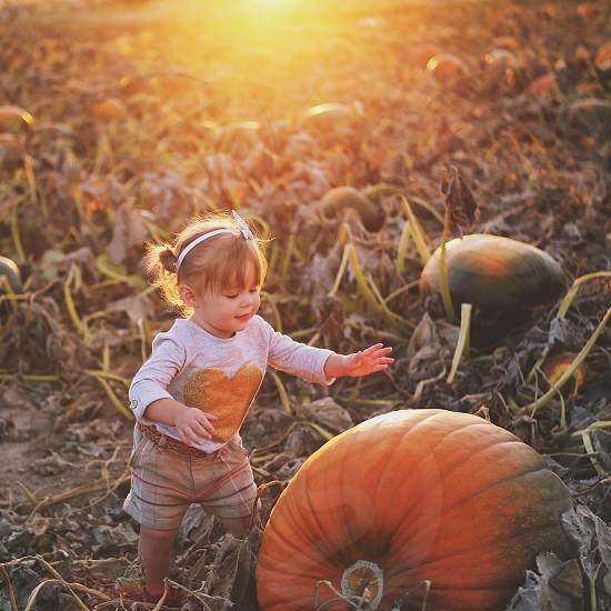 Pumpkin patch play  photo
