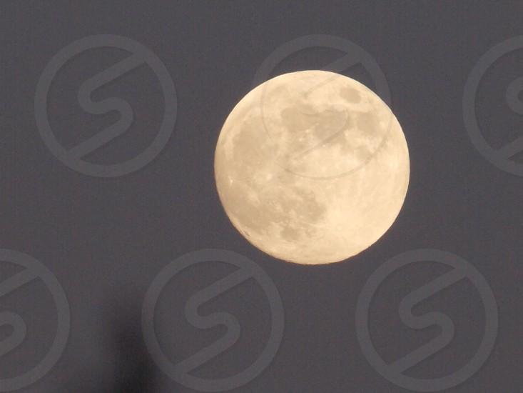 Honey colored moon photo