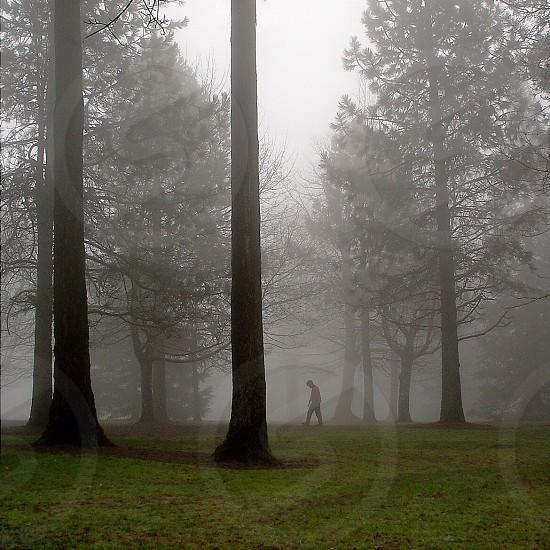 Man walking in fog photo