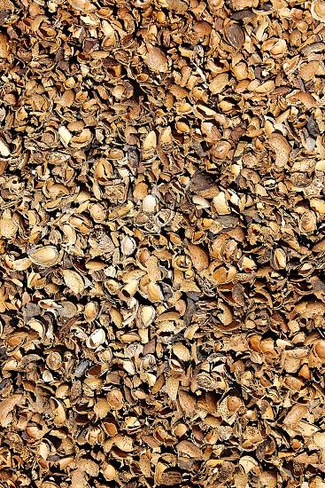 Almond shells texture in Teruel Albarracin of Spain photo