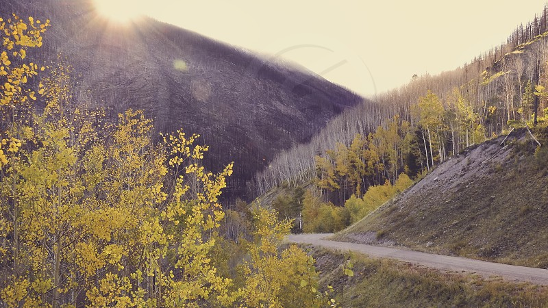 Yellow autumn leaves by sunset in the valley photo