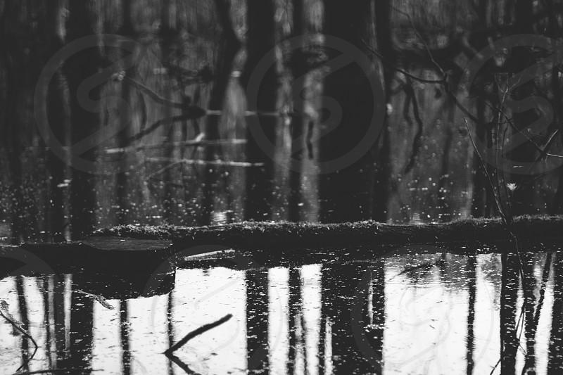 natural reflection photo