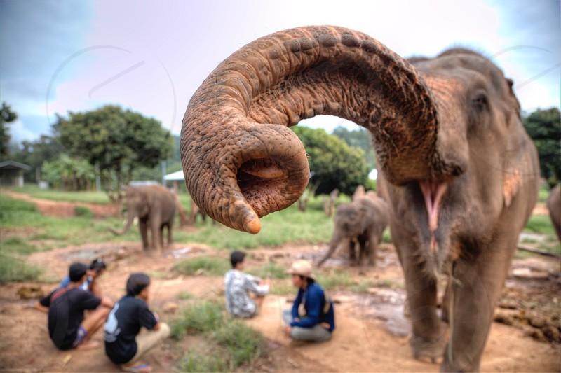 people beside gray elephant photo