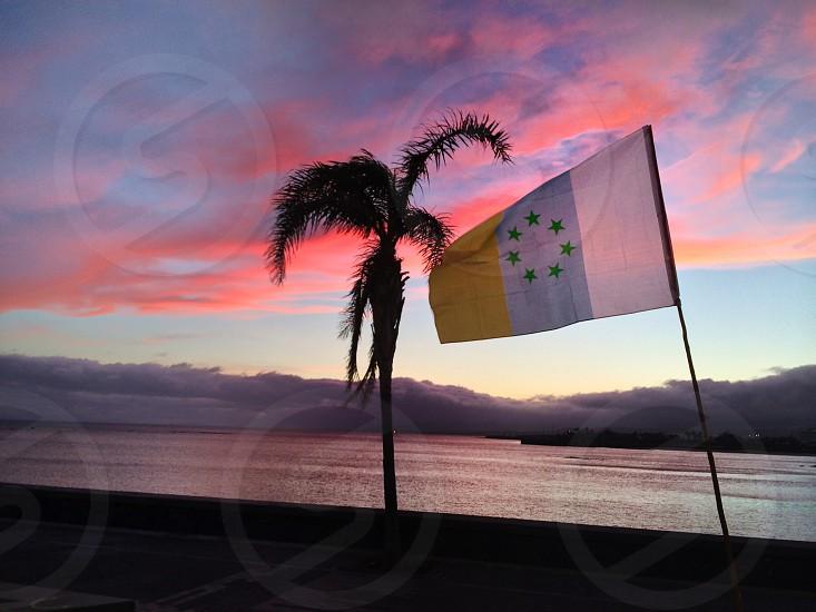green majesty palm tree and Europe union flag photo