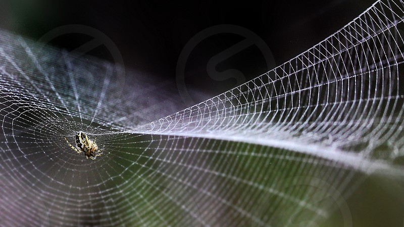 Close up of a spider web with a small spider in the centre photo