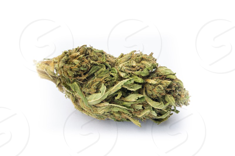 Detail of legal marijuana flowers photographed on clean  background photo
