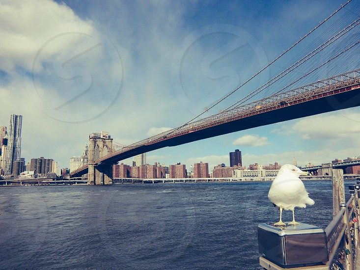 New York Brooklyn Brooklyn Bridge seagulls travel landscape photo