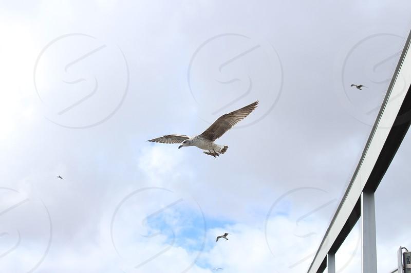 Birds freedom nature love photo