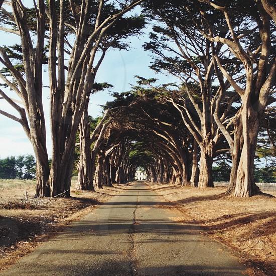 grey tree trunk photo