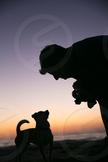 silhouette dog and owner dog on beach dog and owner on beach love pet relationship sunset beach chihuahua small dog pet pets animal animals photo
