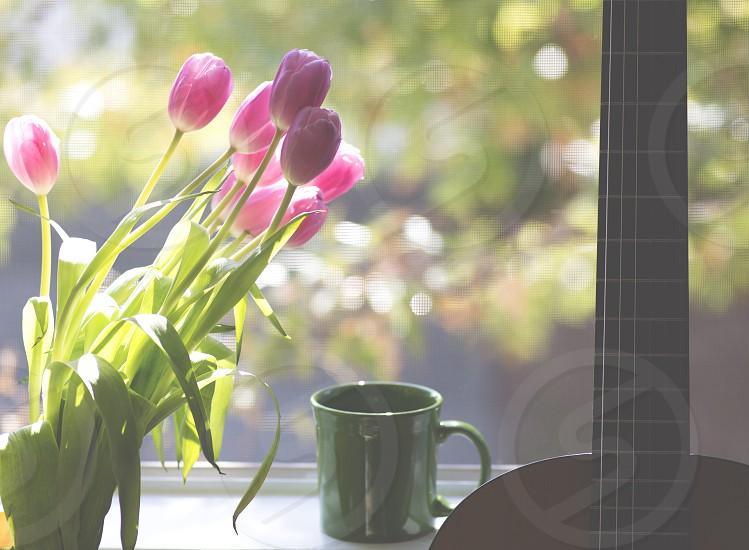 pink tulip flower beside black ceramic mug photo