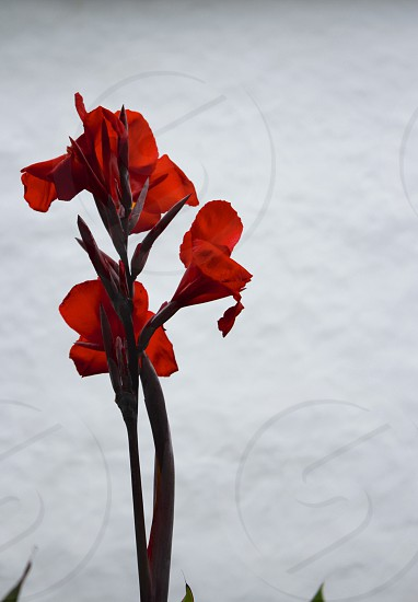 Red on white photo