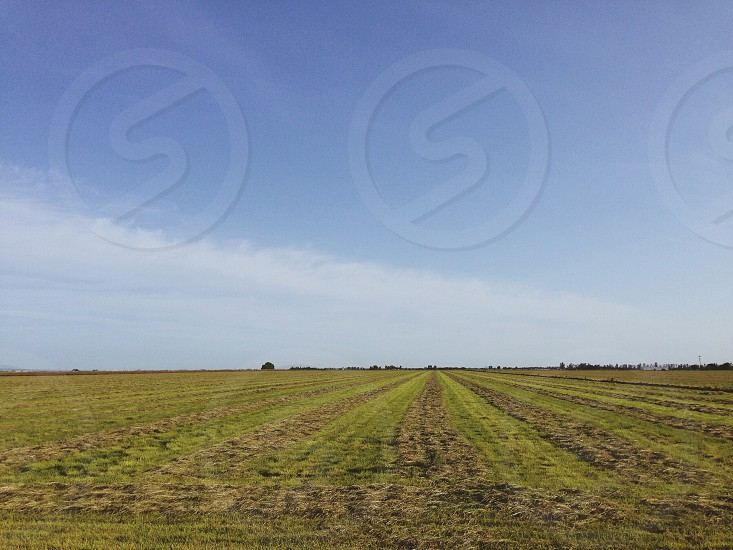 blue sky with light white clouds over green farm field with rows photo