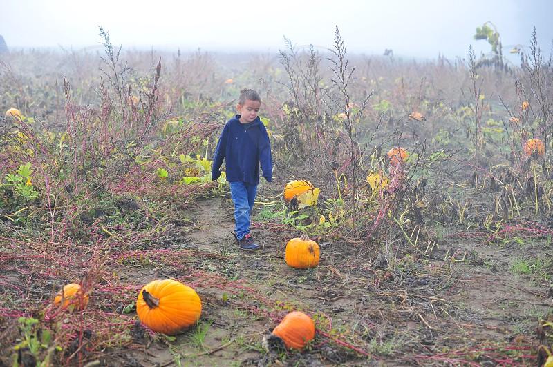 Kids farm country pumpkins pumpkin farm pumpkin picking picking pumpkins fog fall autumn October Halloween cold photo